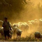 Çoban Kazandı, Hem de Ne Kazandı